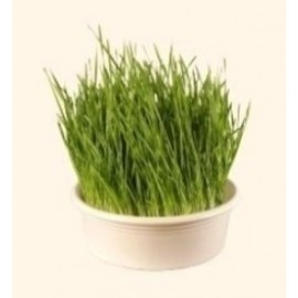Tamis à herbe de blé blanc Ø 23cm - Eschenfelder