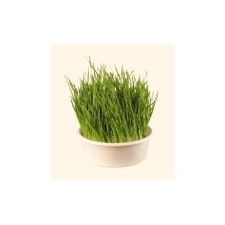 Weizengrassieb weiss Ø 23cm - Eschenfelder